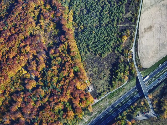 Aerial View Of Trees On Landscape During Autumn