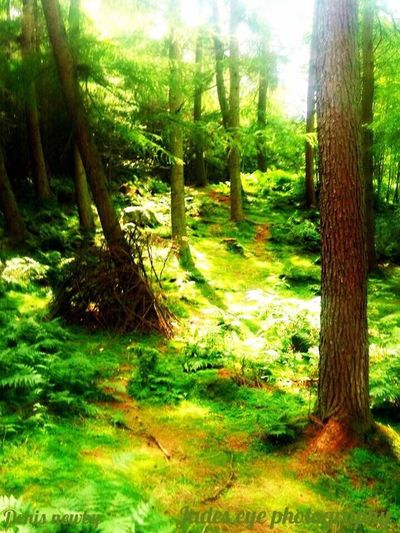 Tree Trunk Tree Nature Tranquility Growth Tranquil Scene Forest Scenics Beauty In Nature No People Day Outdoors Grass WoodLand Landscape Green Color