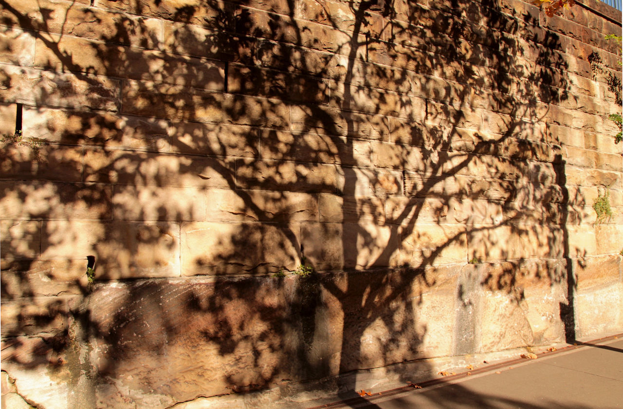 Shadow Of Tree On Wall During Sunny Day
