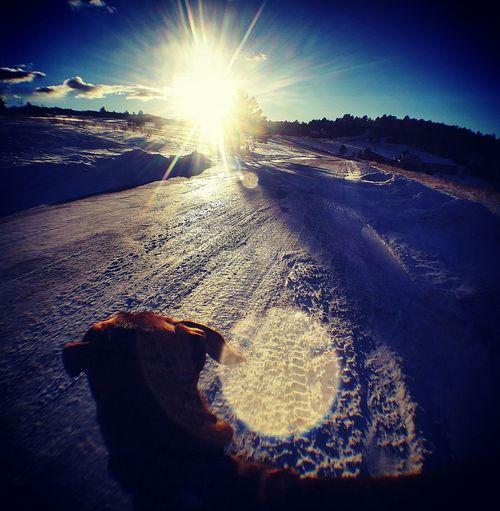 Sunlight Outdoors Sunbeam Snowyroads Eveningwalk😊 Doglife Coloradoweather