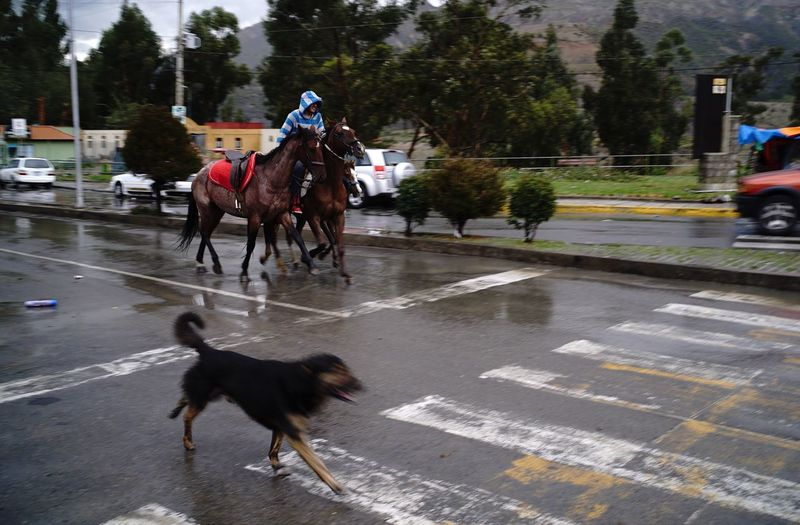 Horse running on road