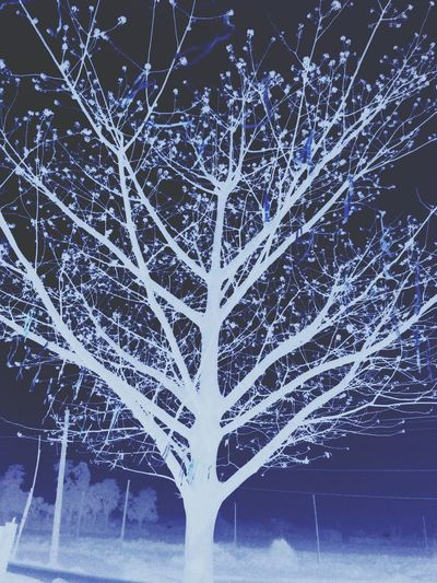 Illusionvs_reality Night Backgrounds Nature Tree No People Winter Snow Beauty In Nature Abstract Cold Temperature Illuminated Outdoors Close-up Fragility Sky Pixelated