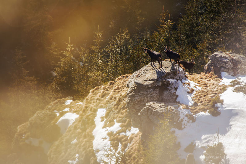 Animals on rocks