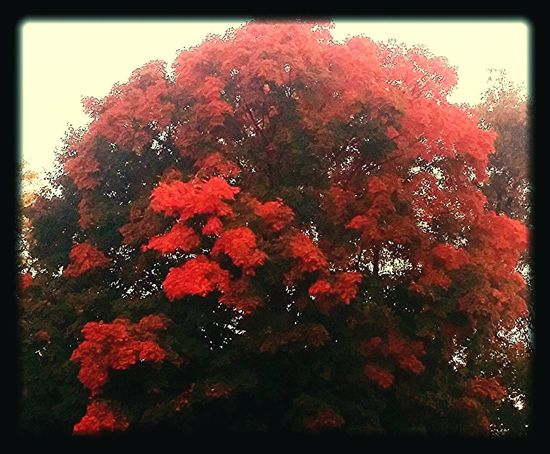 Window Red Tree Indoors  No People Day Growth Close-up Nature Sky Beauty In Nature
