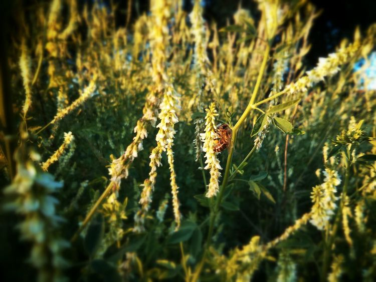 working Bee Focus On Foreground Insect Nature No People Plant Selective Focus Wasp