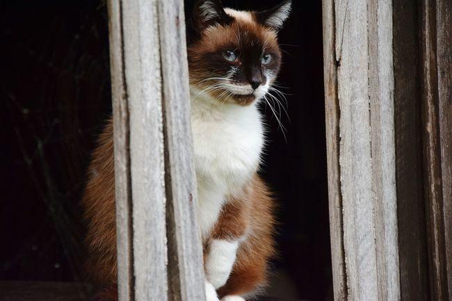 Catoftheday Catsofinstagram Cats Of EyeEm Catsagram Catlover Cat Lovers Cateyes Caturday Natural Cat Eyes Cat♡ Cat Animals Cats Cats 🐱 Cat Photography