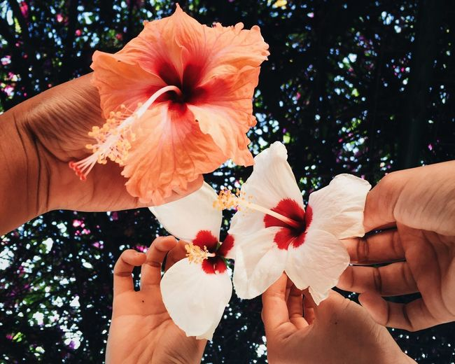 Cropped Image Of Friends Holding Hibiscus Against Tree