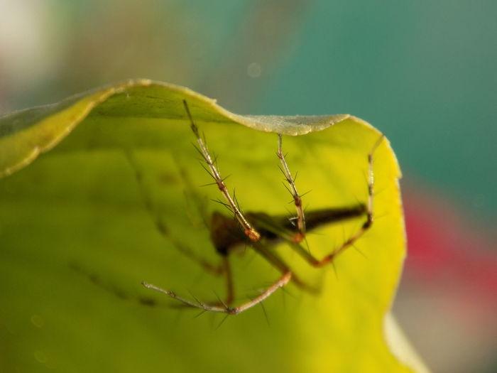 spider..... a