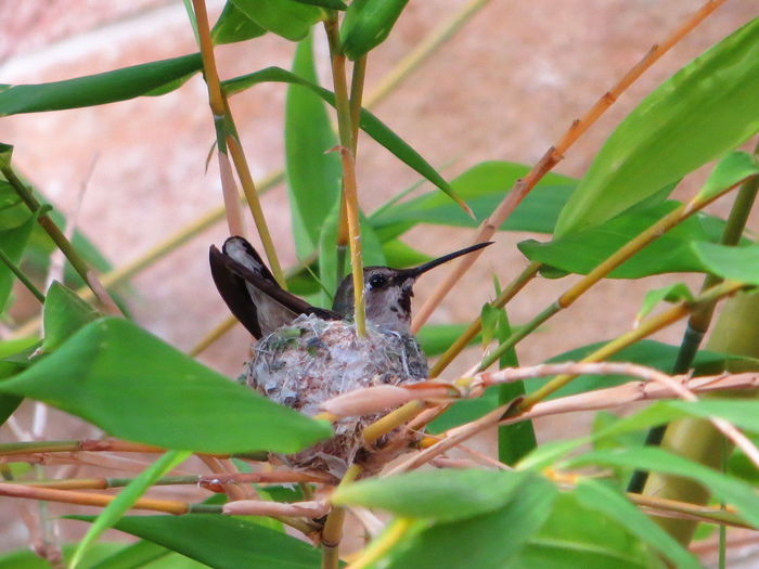 Hummingbird Hummingbird Nest Precious Bird Photography EyeEm Nature Lover Cute