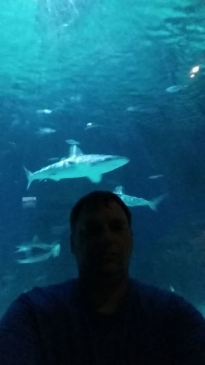 Fish Underwater Sea Life Aquarium Shark Swimming One Person Animals In Captivity UnderSea Large Group Of Animals Water One Man Only Only Men Animal Wildlife Indoors  Adult Adults Only Men Sealifeaquarium Sharks Sommergefühle