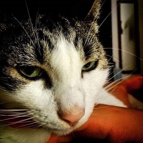 Buonanotte Welcome Welcomehome Goodnight Cat Bed Night Gatto Spugna BuonaNotte Bentornata Bentornataacasa Letto Notte Comemiamitunonmiamanessuno Cometenessunomai