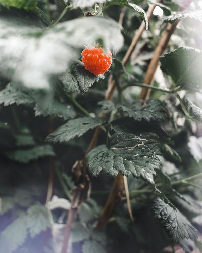 Growth Food