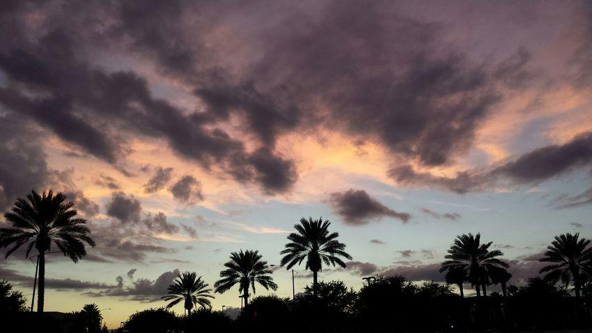 Evening in Orlando, FL. Orlando EyeEm Orlando Florida EyeEm Florida U.S.A. EyeEm U.S.A. United States United States Of America EyeEm United States Of America