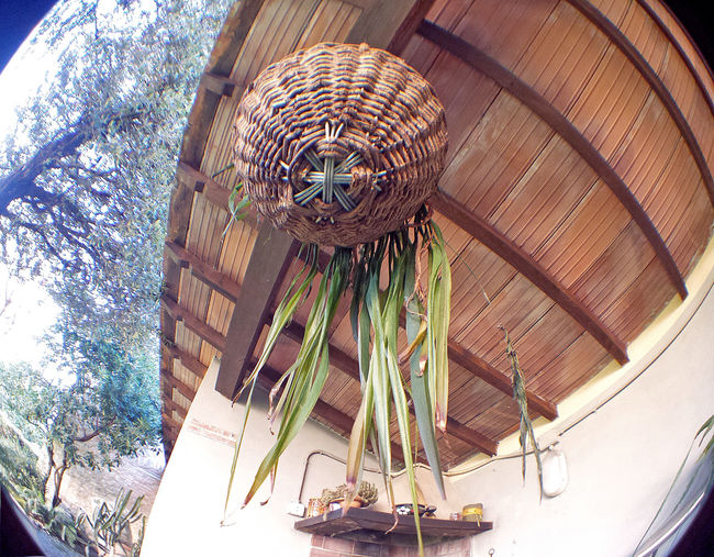 Close-up Day Fish Eye Fish Eye Lens Low Angle View Nature No People Outdoors Plant Potted Plant Sky