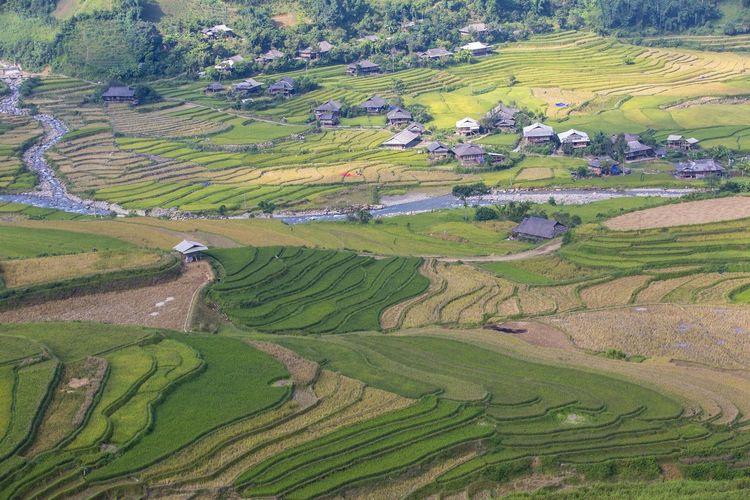 Farm Rice Paddy Terraced Field First Eyeem Photo