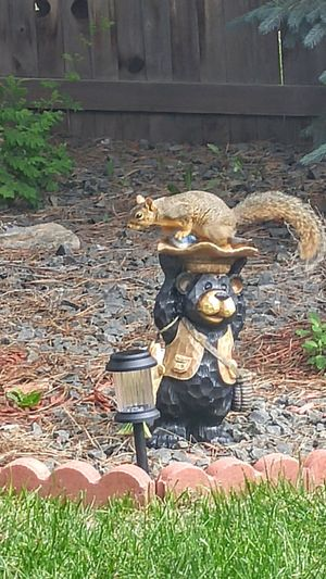 Outdoors No People Squirrel Life Squirrel Photography Squirrel On Yard Statue Thats My Bear My Backyard View My Back Yard