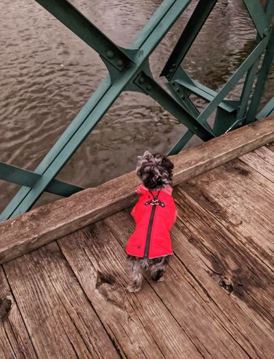 Rear view of dog on wooden bridge