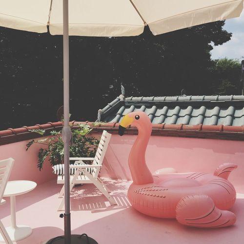 핑크플라밍고 원남동 Pink Pinkflamingo