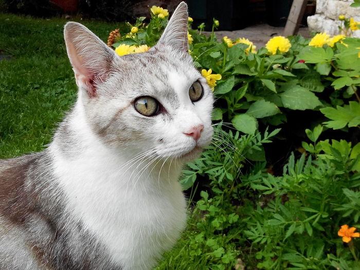 Un chat de passage . Photo Faite Avec Un Wiko