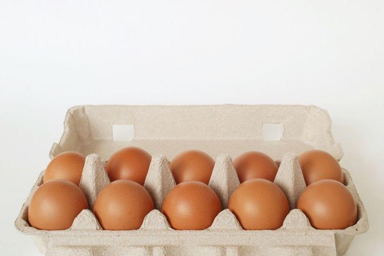 Egg Tray Shell