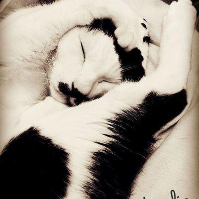 Cat Cats Cat♡ Catsofinstagram Cat Lovers Pets Pets Corner Pet Petal Petstagram Petpet Petlover HongKong Lovepet Hk