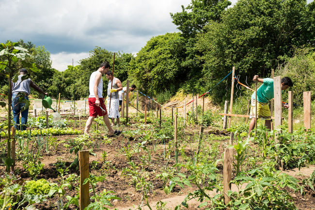 Scharnhausen, Germany - June 26, 2016: German volunteers were supporting African, Arabic and Asian refugees in setting up a small garden behind their refugee camp in Scharnhausen, Germany that is now eagerly maintained by the refugees. Over 1 million refugees arrived in Germany in 2015 alone, integration of these people requires enormous efforts by the government but also by thousands of volunteers supporting the integration of these refugees. Farming Garden Gardening Nature Refugee Camp Refugeecamp Refugees Refugees Welcome Self Contained Vegetables Volunteer Work Volunteers