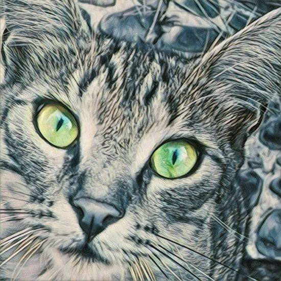 Domestic Cat Cat Pets One Animal Animal Themes Domestic Animals Whisker Close-up Feline Mammal Looking At Camera Animal Eye Green Color Focus On Foreground No People Animal Hair
