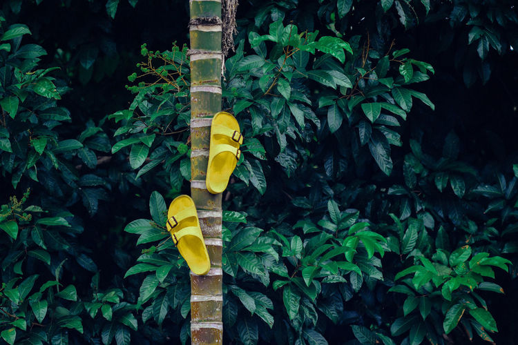 Sandals Hanging On Tree