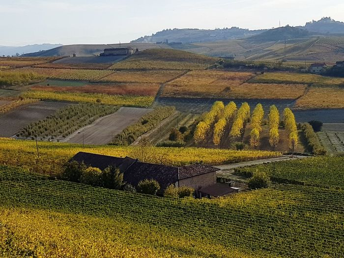Langhe Roero Tranquility Vineyards In Autumn Autumn Autumn Colors Travel Destination Hill From Above  Agriculture Rural Scene Nature Field Landscape Yellow No People Outdoors Scenics Beauty In Nature Day Sky
