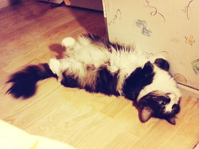 My Kitty Cat Cat