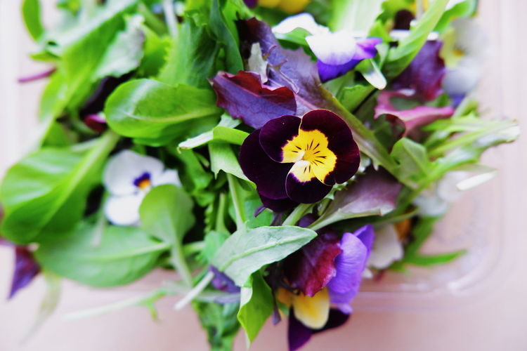 Flower Flowering Plant Freshness Plant Beauty In Nature Fragility Vulnerability  Petal Close-up Flower Head Plant Part Inflorescence Leaf Nature Growth No People Purple High Angle View Pansy Indoors  Pollen Flower Arrangement Salad Still Life