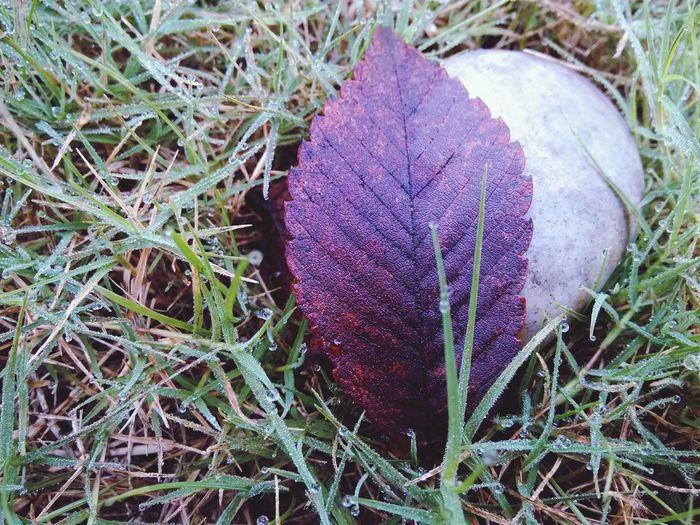 后山的那些树 Autumn Leaves Autumn Colors