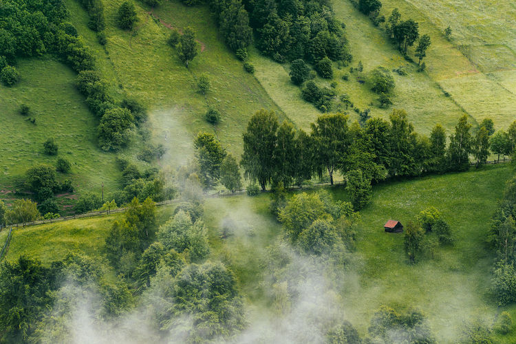 High angle view of foggy hill with meadow and trees in summer