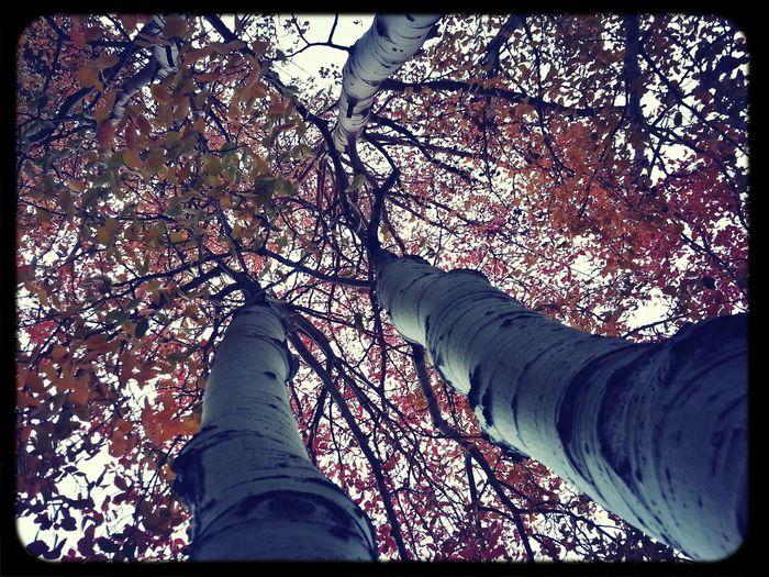 TreePorn Kross Filter Autumn Leaves