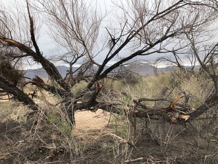 Bare Tree Abandoned Tree Destruction Damaged Day Branch No People Dead Plant Outdoors Nature Landscape Social Issues