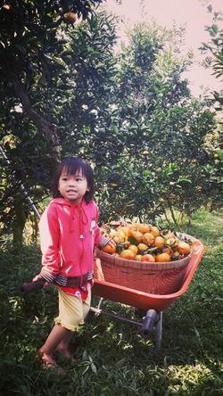 Vườn quýt Lai Vung. Lai Ving farm Viet Nam Travelling Relaxing Viet Nam