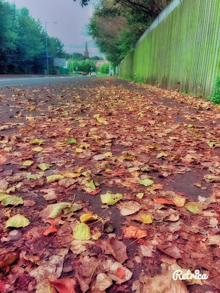 Autumn #fall Tree Leaves Sidewalk Sunny Autumn Day (null)Outdoors No People Low Angle View