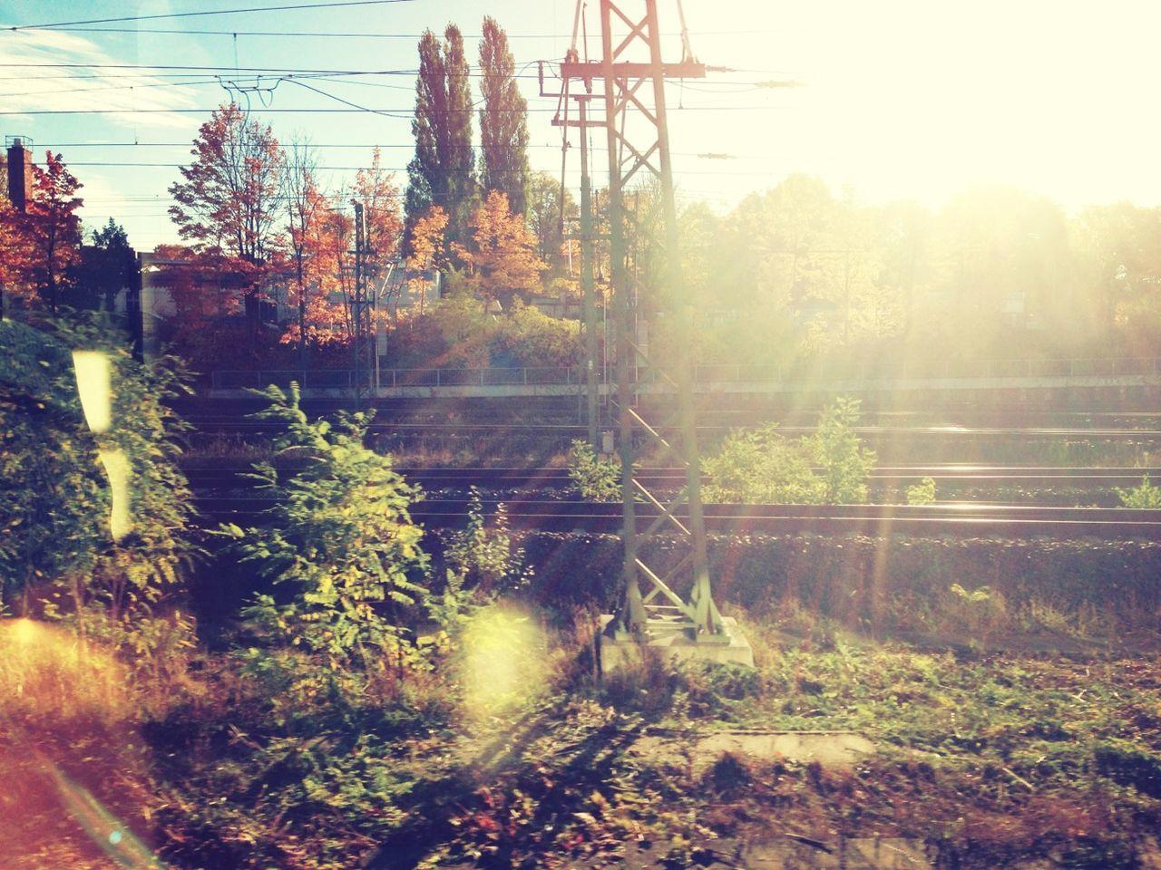 SUN SHINING THROUGH TREES IN THE DARK