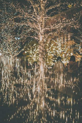 Water Illuminated Nature Tree Night Celebration No People Backgrounds Plant Outdoors Architecture Reflection Motion Event Light City Fountain Winter Sky