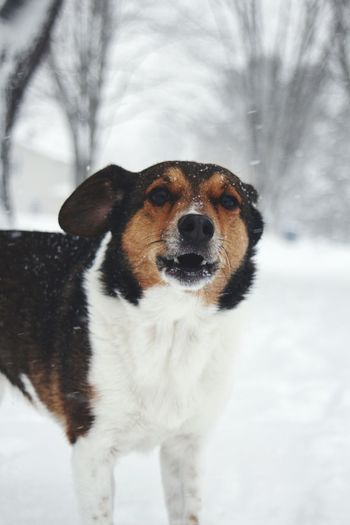 Pets Portrait