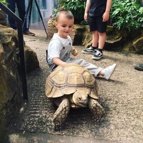 Friends 🐢 Childhood Lifestyles Boys Tortoise Family Animal Themes Nature Bekind Wildlife Organic Love RaisingBoys Loveanimals Memories Fashion Toddler  EyeEmNewHere