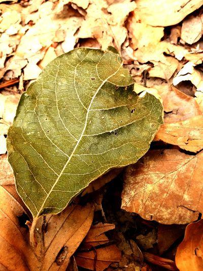 🍁autumn 🍁 Fall🍁 Blatt Waldtag🌳☘🍃🍂 Leaf Day First Eyeem Photo EyeEm Selects