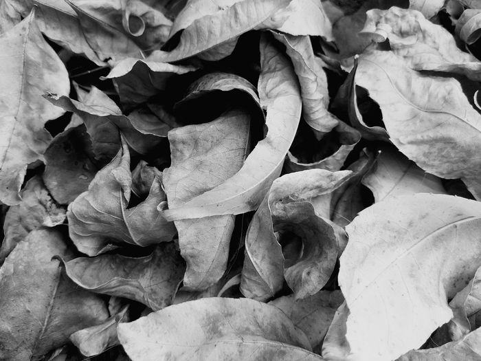 Beauty In Nature Nature Backgrounds Full Frame Close-up No People Outdoors Day Black & White Photography Blackandwhite Photography Bkack&white B&w B&w Street Photography EyeEmNewHere Beauty In Nature Nature_collection Love To Take Photos ❤ EyeEm Best Shots Nature Taking Photos Leaf 🍂 Otoño 🍁 Nature Photography Tanu