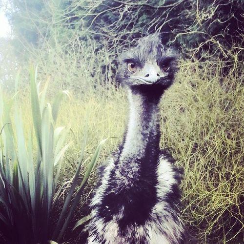 Emu Lothertonbirdgarden Cute Iwantone Dinosour Conservation