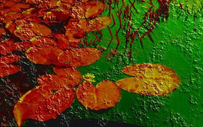 Red leaves joyful misty water Autumn Colors