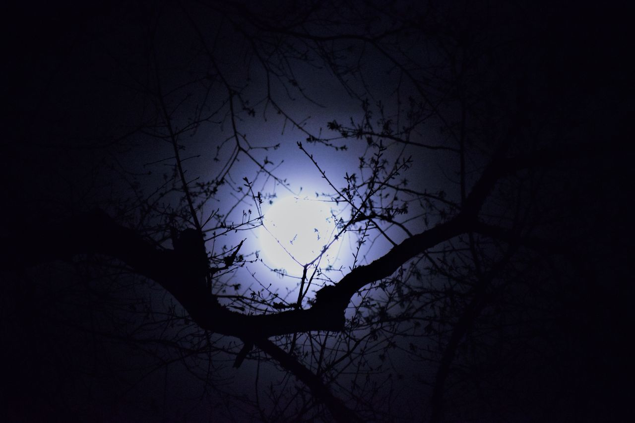 silhouette, tree, bare tree, sky, branch, low angle view, nature, dusk, no people, sunset, outdoors, scenics, beauty in nature, tranquility, night, moon, astronomy