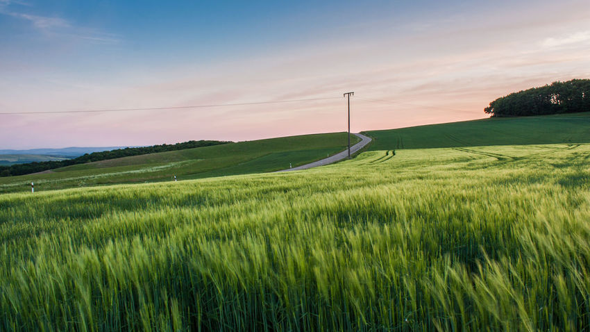 Agricultural Land Blue Clouds Fields Green Color Growth Landscape Nature No People No Traffic Outdoors Plants Pole Power Line  Road Rural Scene Sky Tranquil Scene Trees Wheat Field