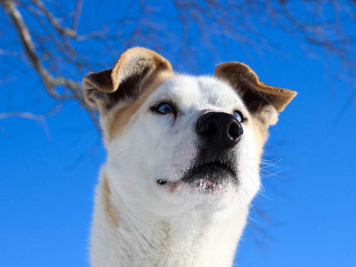 Close-up portrait of dog against blue sky