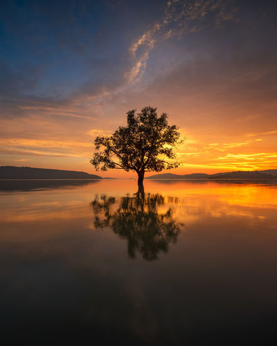 Lonely Tree Lonely Tree Tree EyeEm Selects Sunset Tree Horizon Over Water Sky Reflection Tranquility Silhouette Cloud - Sky Water Beauty In Nature