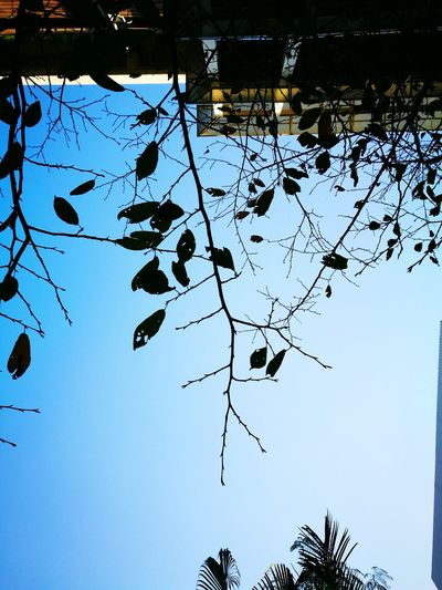Nature Clear Sky Low Angle View Day Outdoors Tree One Person Sky Branch Close-up